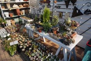 多肉植物売り場
